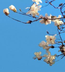 Blossoms | Mario Alberico | www.gallery119.com