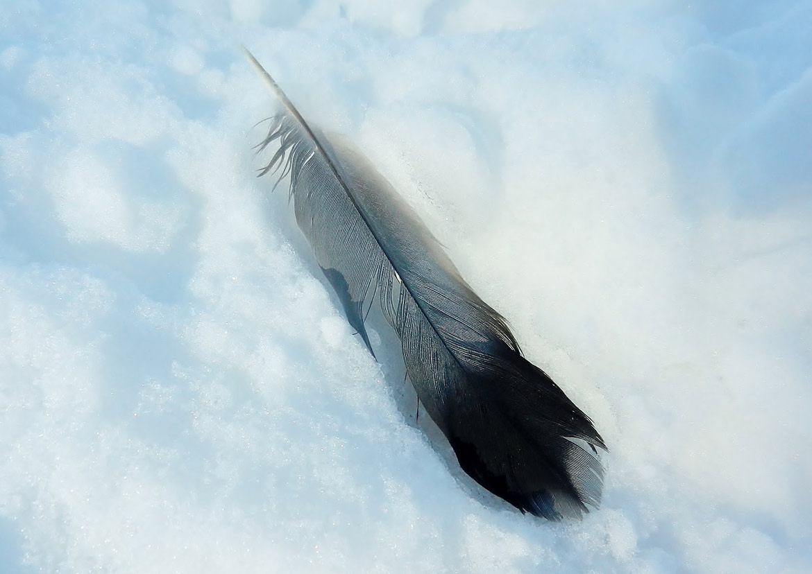 Delwyn's Feather - Short Story by Patricia Crisafulli