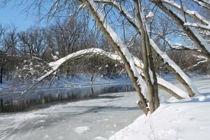 February Trees | Patricia Chrisafulli
