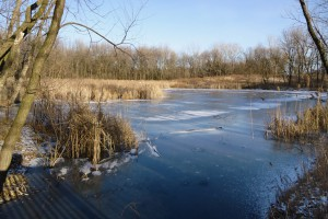Frozen Pond Photograph by Patricia Crisafulli