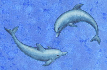 Dolphins | Poetry by John Grey