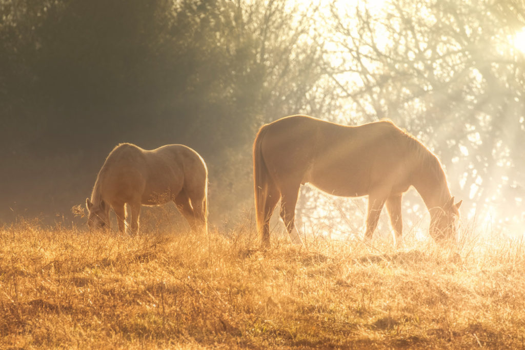 Horse Dawn- Allin Sorenson Photography